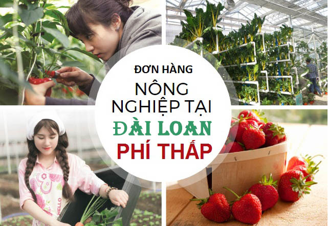 don hang nong nghiep dai loan